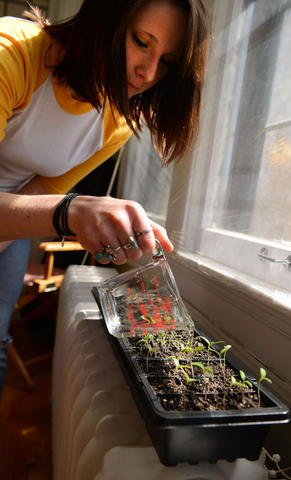 "Nursing and horticulture senior Shanda Demorest waters plants for the Prospect Park community garden Tuesday, April 2, 2013 at her home in Prospect Park. ""These plants need a little extra boost before we start planting in early to mid-May, hopefully,"" she said. (Photo by Amanda Snyde)"