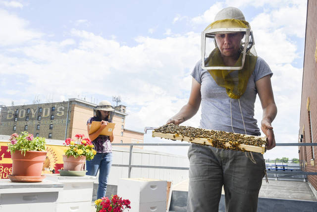 Bee Squad team member Chris Kulhanek carries a frame from a hive at the rooftop apiary at Urban Ventures in south Minneapolis on Monday afternoon. Recent state allocations will partially fund the construction of a new University Bee Lab on the St. Paul campus. (Photo by Chelsea Gortmaker)