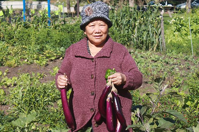 (MinnPost photos by Ibrahim Hirsi) Khoua Vang harvests vegetables she grew at Hope Lutheran Church garden.