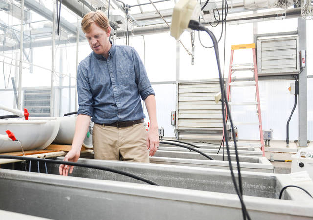 (Photo by Holly Peterson) College of Veterinary Medicine assistant professor Nicholas Phelps explains aquaponic farming in a greenhouse in St. Paul on July 25, 2014. Phelps' project is one of 17 receiving funding from MnDRIVE.