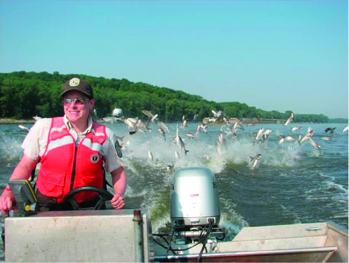 This U.S. Fish and Wildlife photo from the Illinois River shows silver carp jumping when startled. The flying fish can cause accidents, and the various types of carp starve out native species by eating all their food.