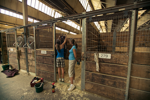 Minnesota State Fair Champion horse rescued from slaughter ...