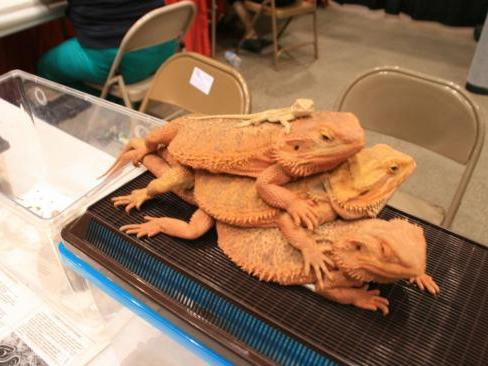 Twin Cities Pet Expo attracts large crowds who love dogs and